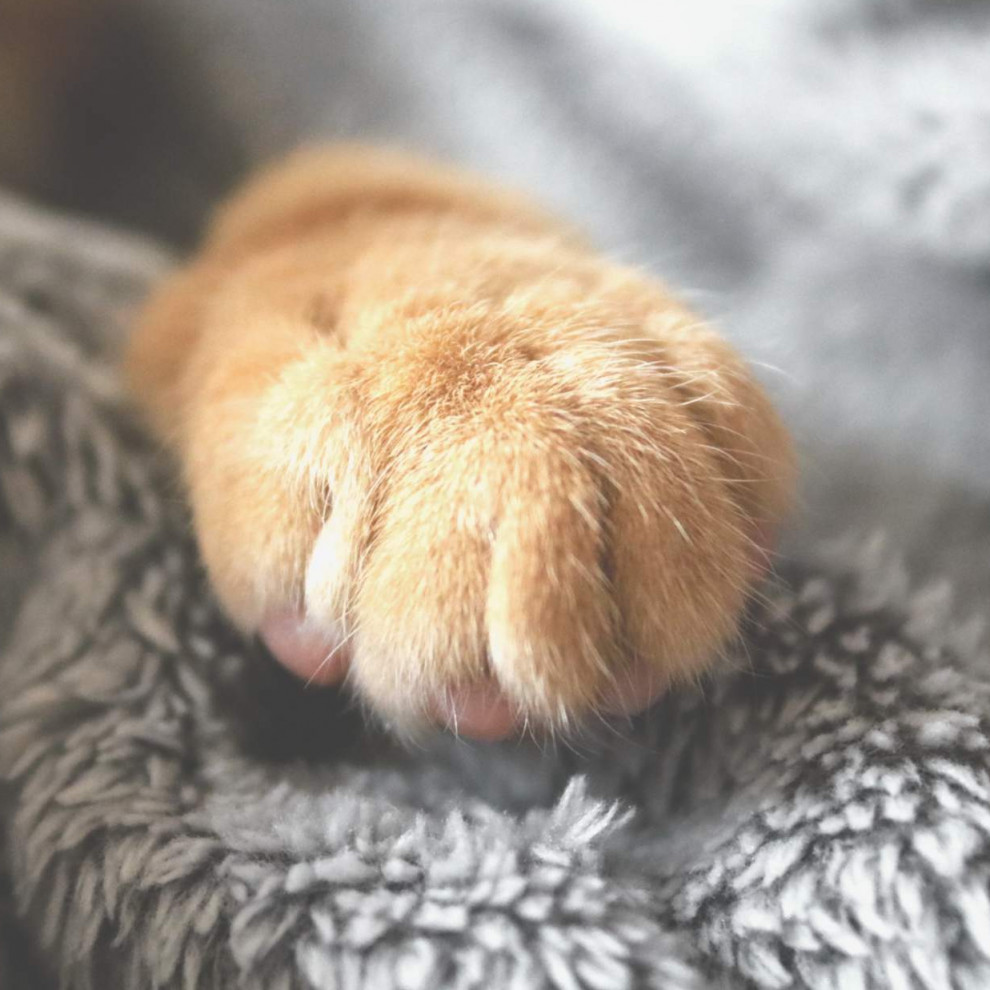 selective photo of brown pet paw 1440406